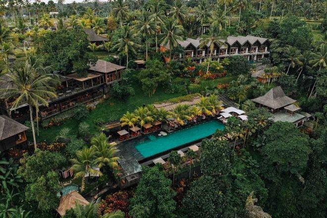 piscina de palmeras