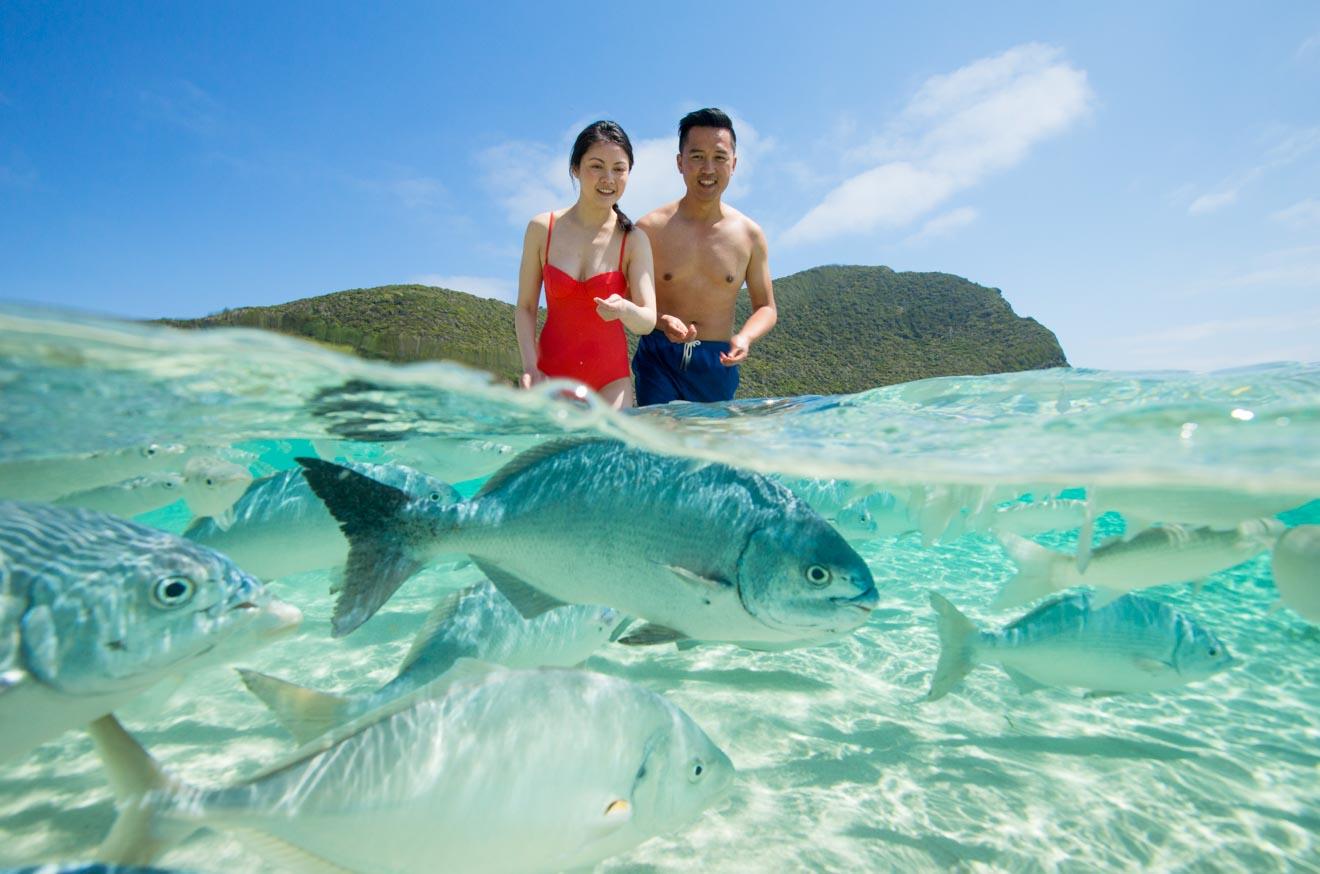 Playa Neds Lord Howe Island Actividades