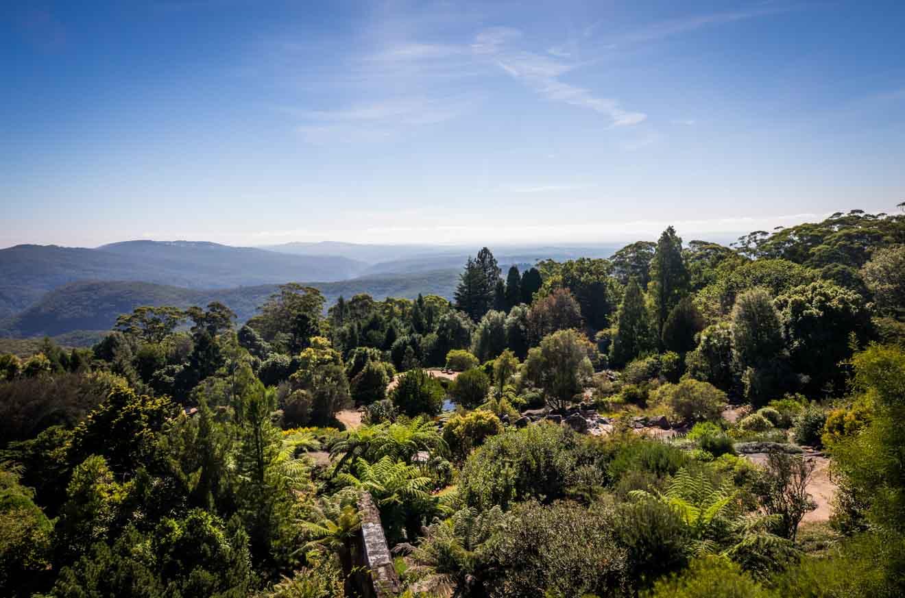 actividades en el Jardín Botánico Blue Mountains
