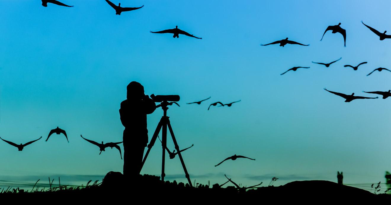 observación de aves en los jardines de arkarra cosas que hacer en hervey bay