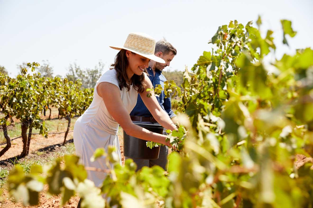 visita a los viñedos en Brokenwood Wines, Pokolbin, temporada de Hunter Valley