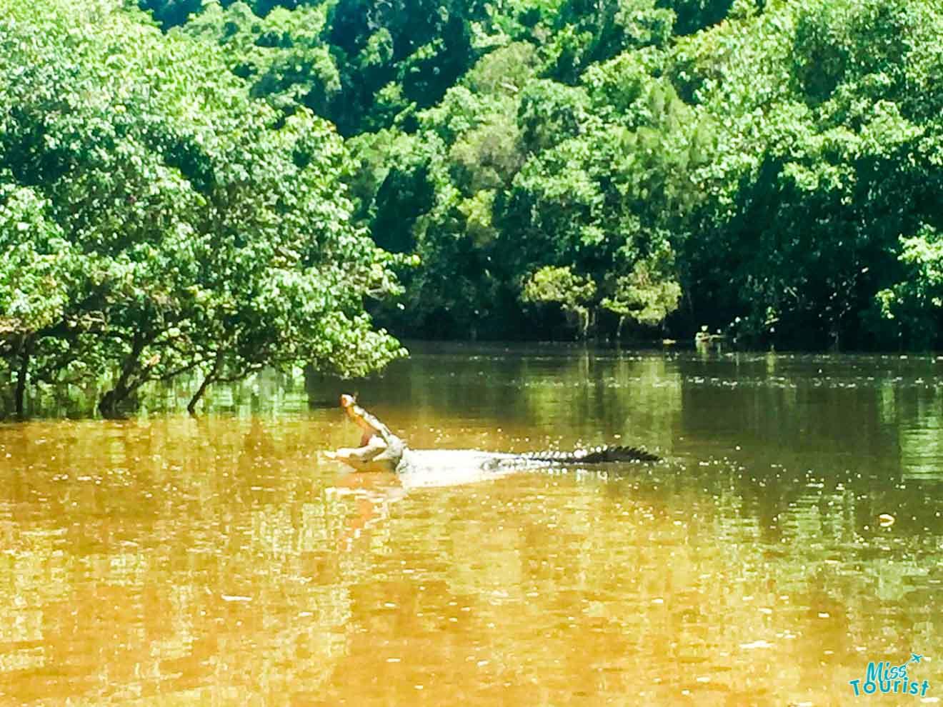actividades de cocodrilos en port douglas