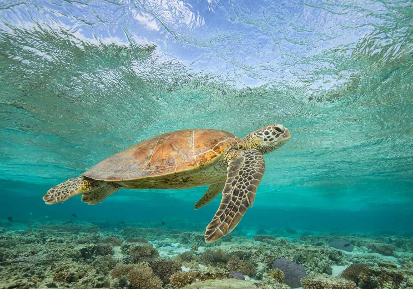 tortuga marina en el puerto de douglas