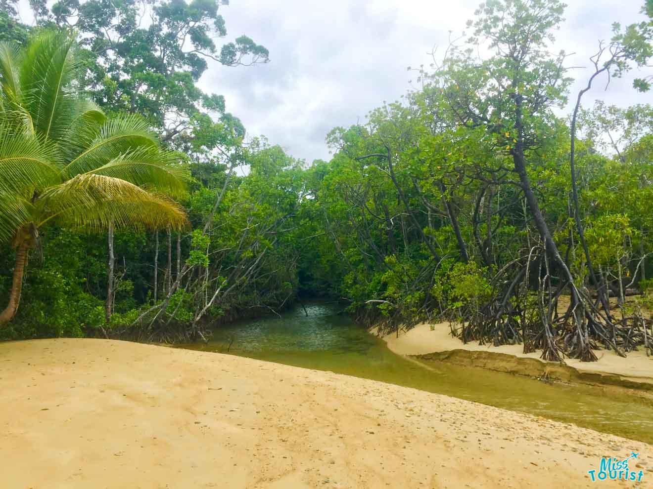 cosas que hacer en la selva tropical en Port Douglas