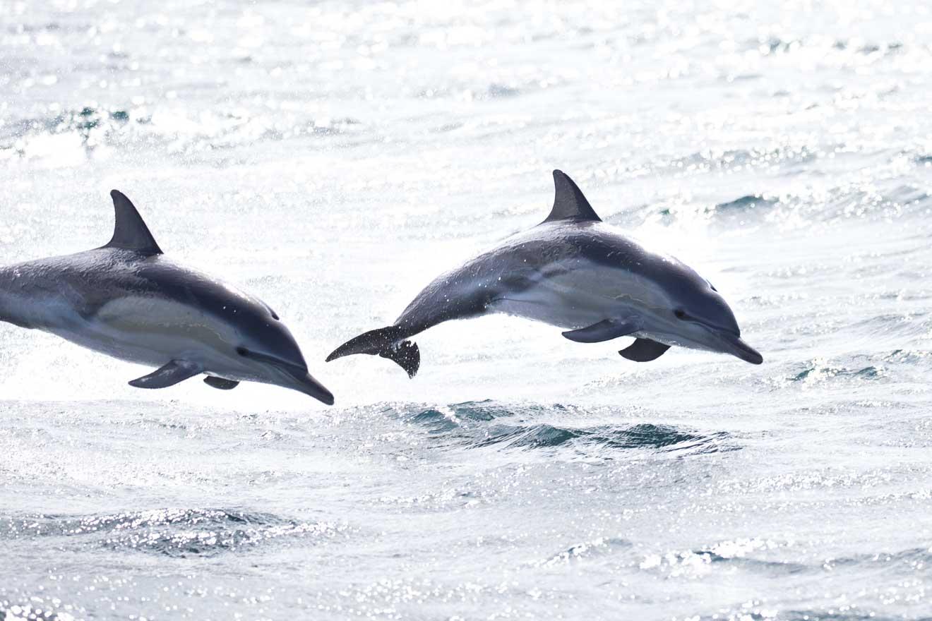 Caminata en la bahía de luces comunes de delfines
