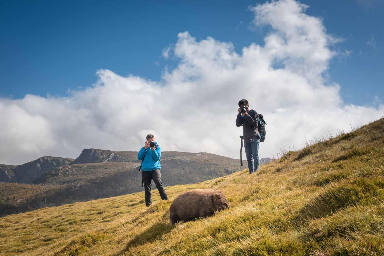 Fotografiando una pista de wombat Overland para el blog