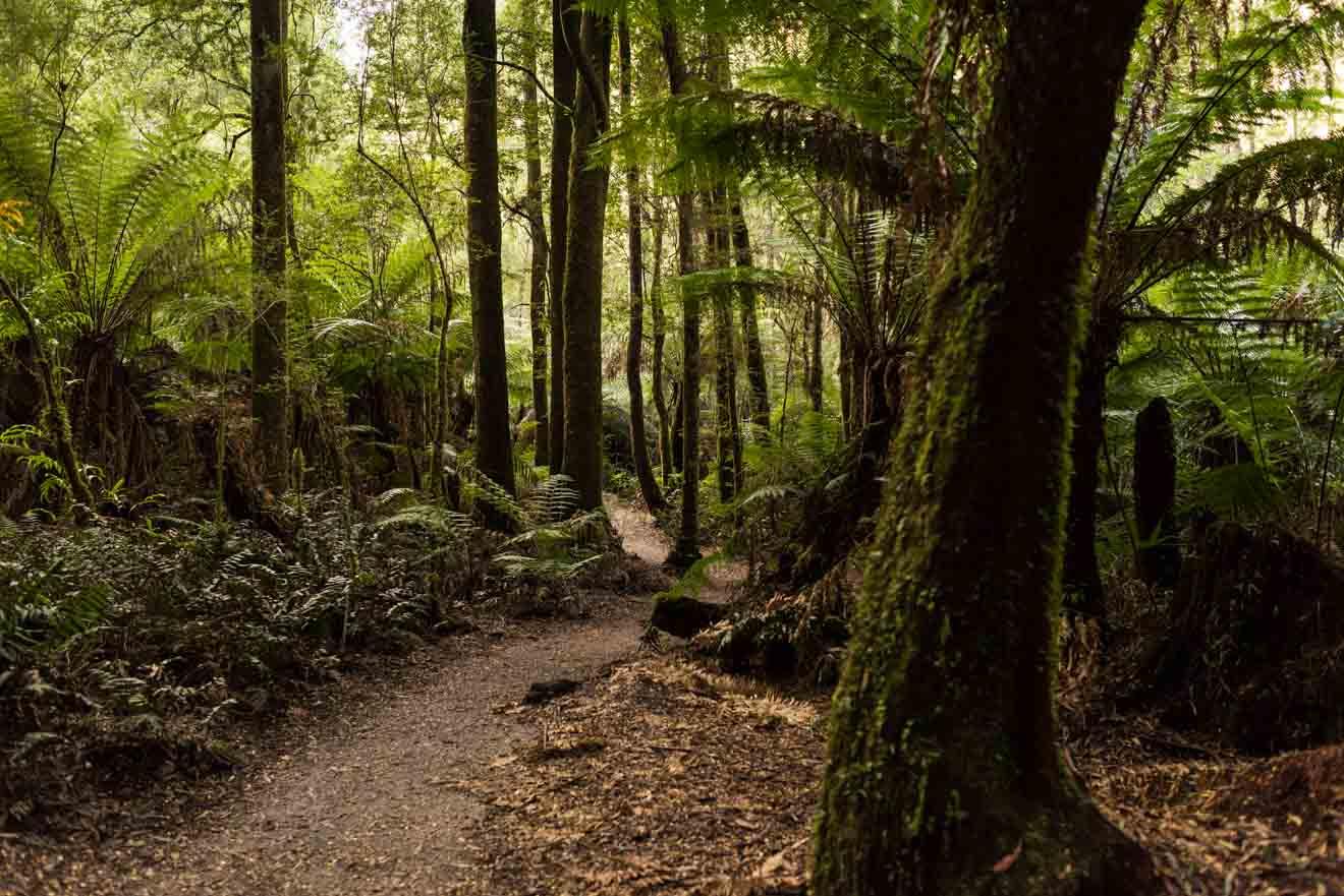 Grandes secretos ocultos de Ocean Road - Great Otway Park
