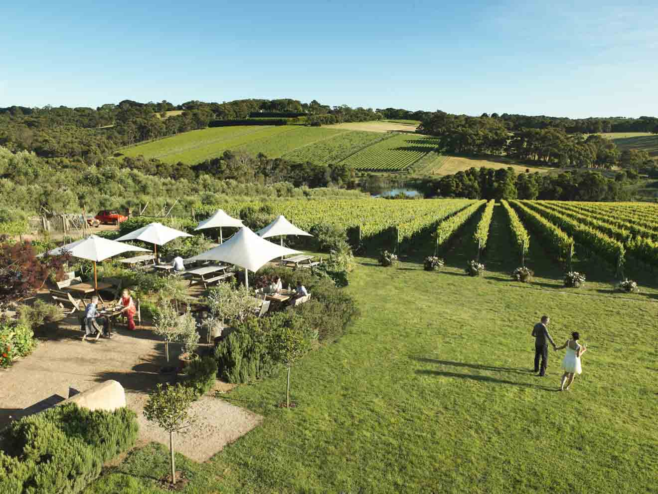 ideas para reuniones - Montalto Vineyard and Olive Grove ¿Qué hacer en Mornington Peninsula?
