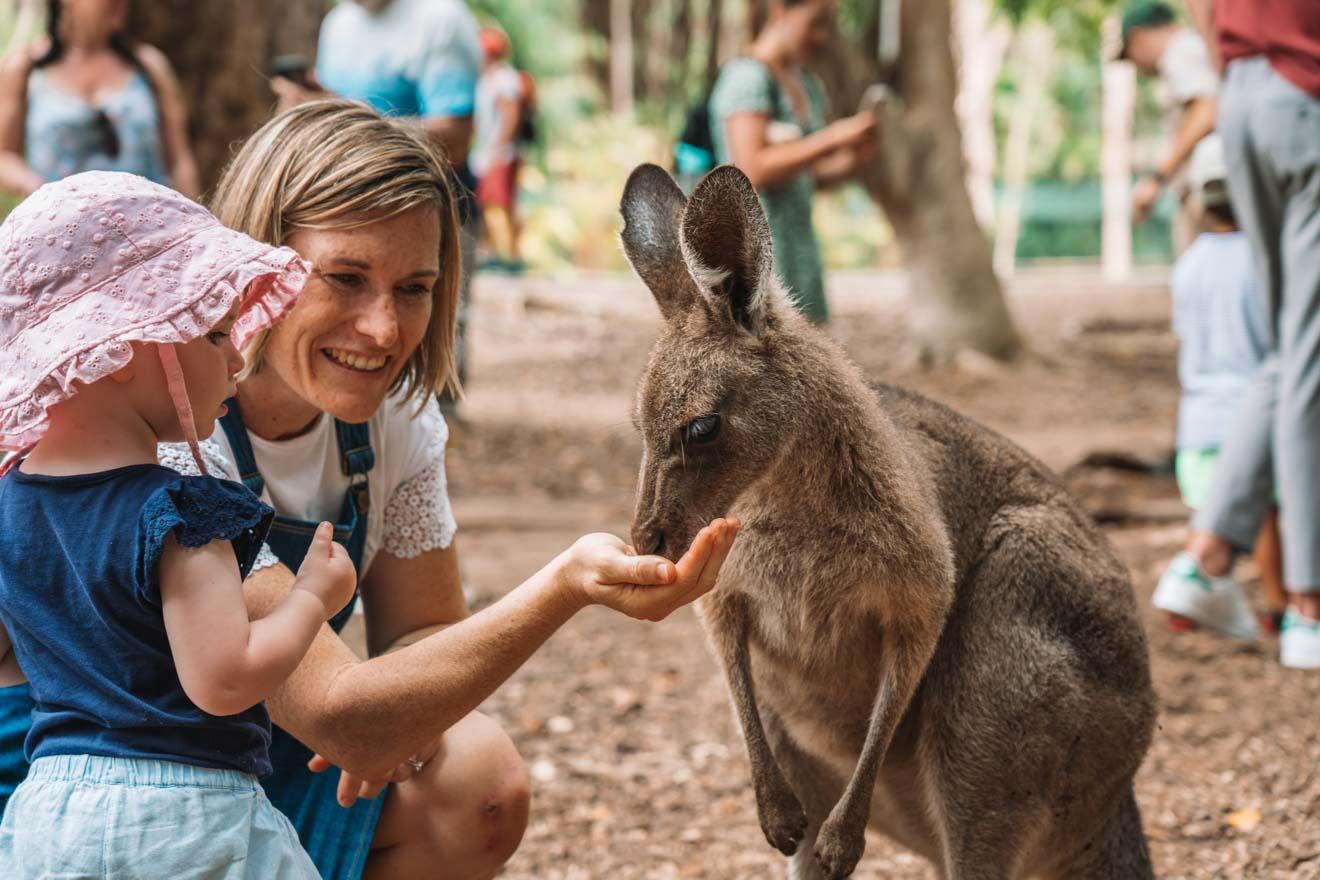 zoológico de australia cosas que hacer en sunshine coast