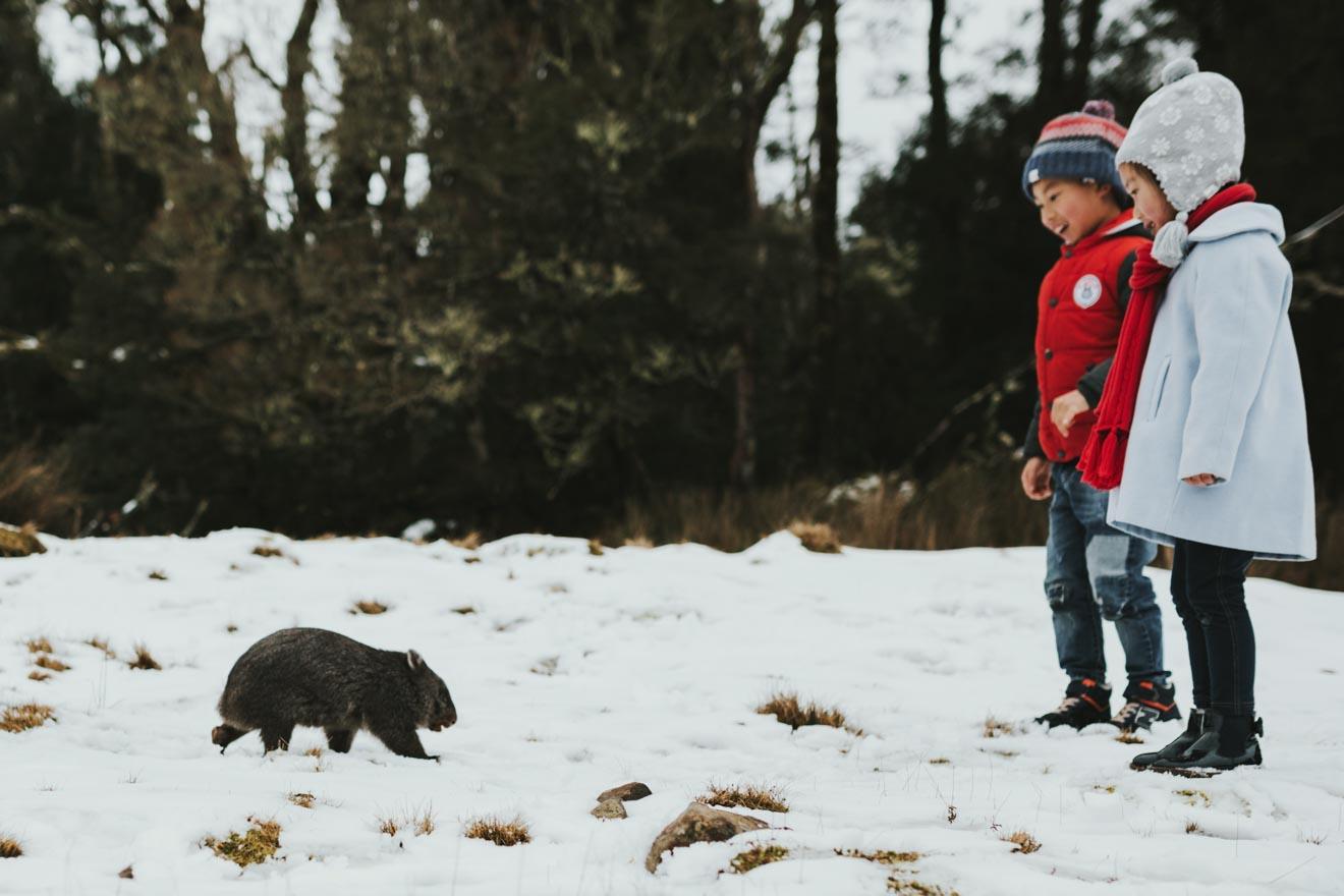 Temporada de nieve de Cradle Mountain - Devils @ Cradle