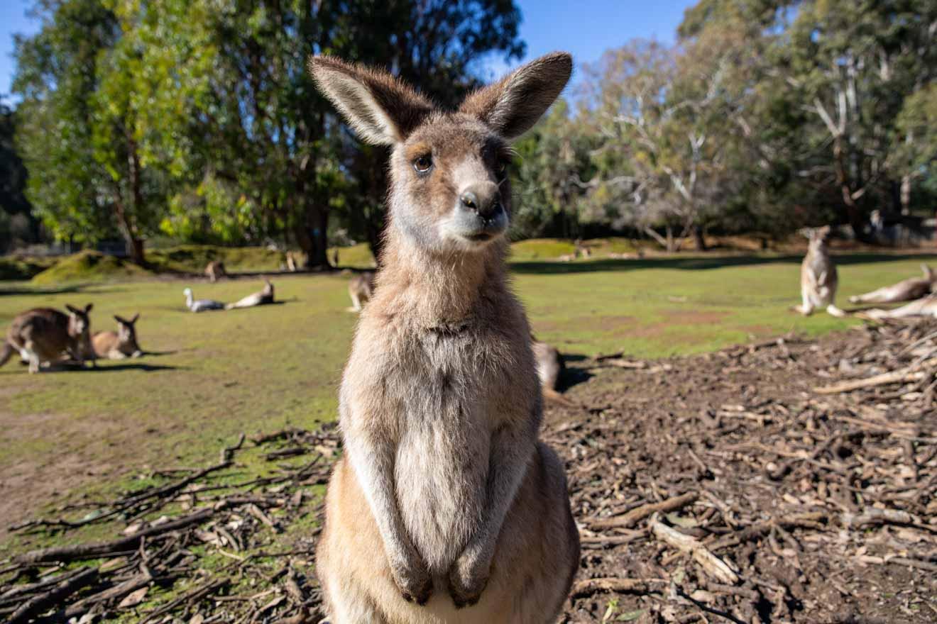 visita wollongong - ¿Qué hacer en Wollongong?