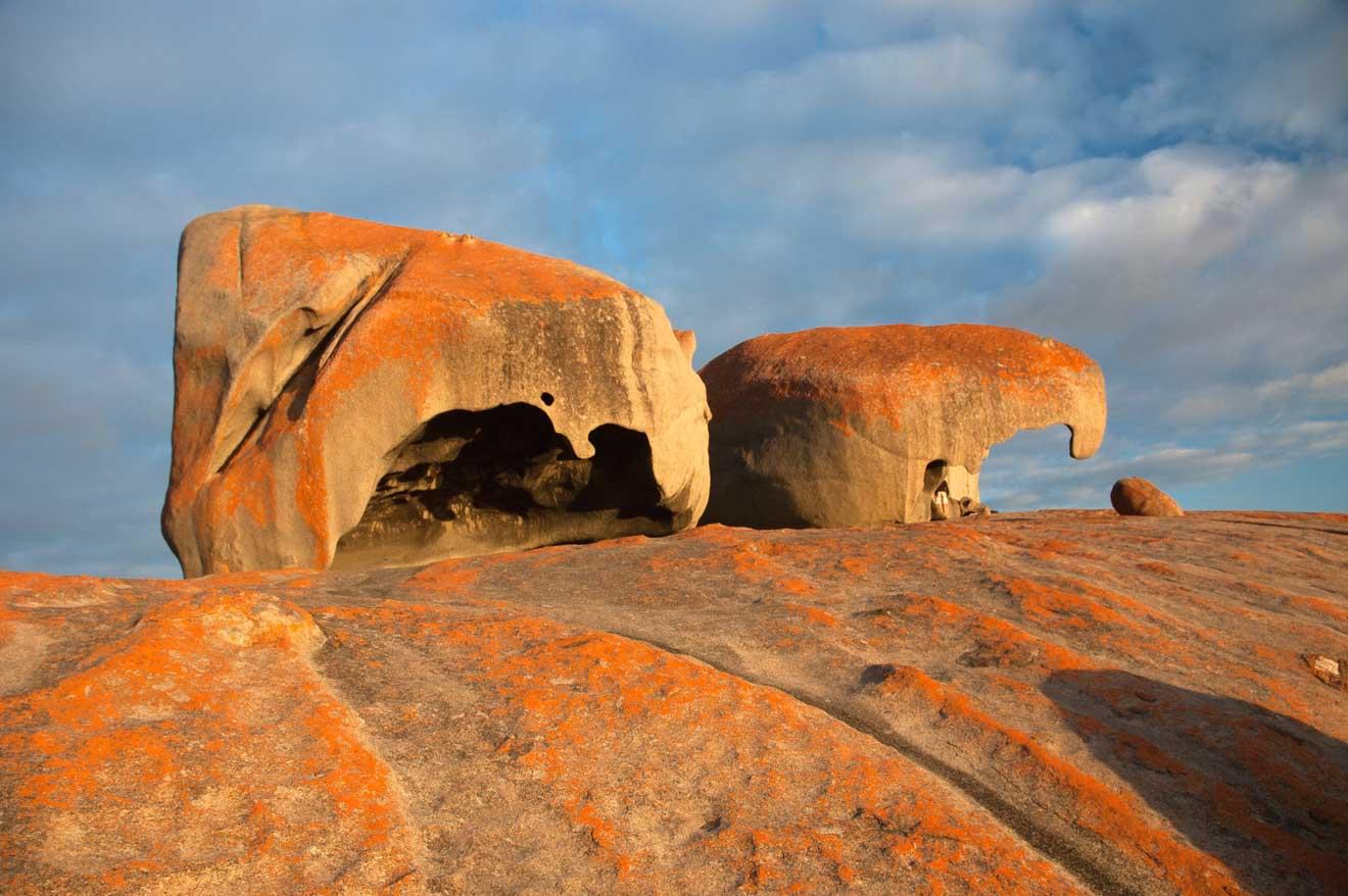 excursiones a la isla canguro - Australia del Sur Cosas que hacer en Isla canguro