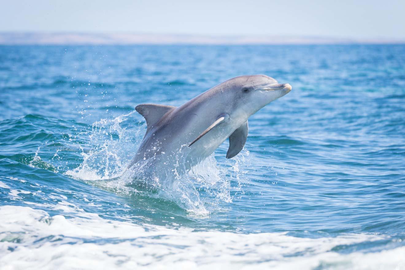 Kangaroo Island Today - Dolphin Qué hacer en Kangaroo Island