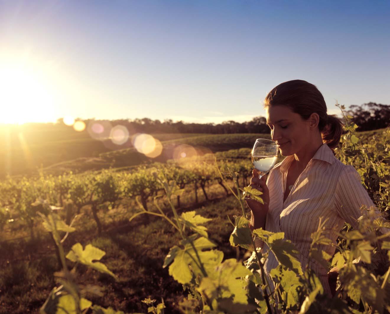 lo mejor del valle de barossa - Finca vinícola Qué hacer en las bodegas del valle de barossa