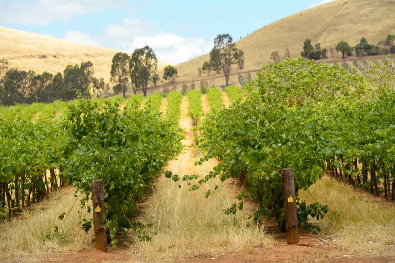Barossa Valley Tours - Adelaide Qué hacer en Barossa Valley Wineries