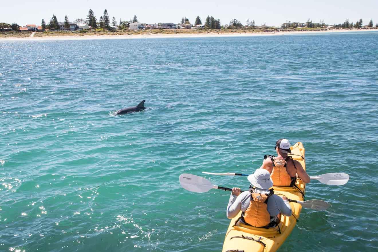 observación de botes y ballenas en el Parque Marino de las Islas Shoalwater