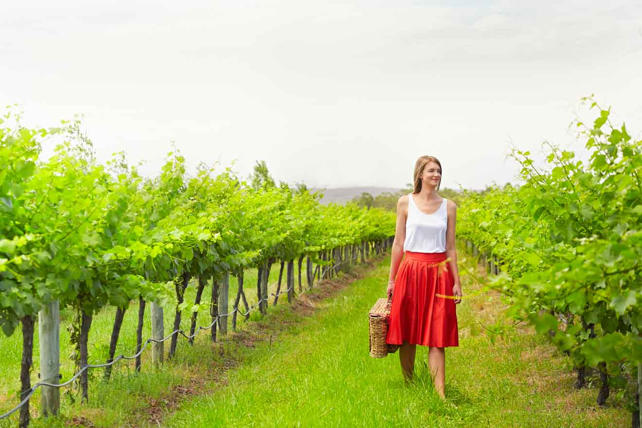 Lancaster Wines, los mejores viñedos del valle del cisne