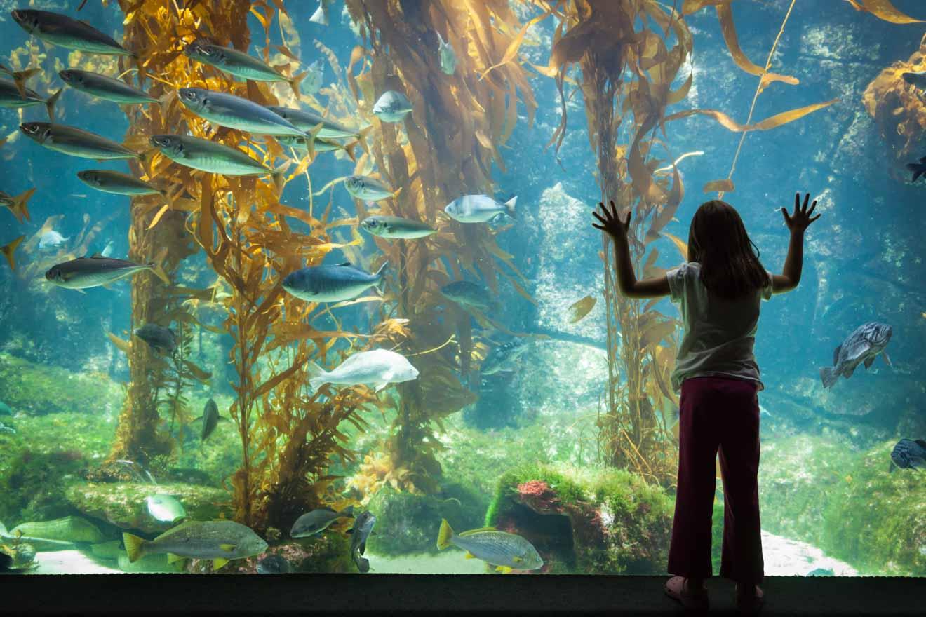Los mejores sitios turísticos - Acuario para hacer en Merimbula