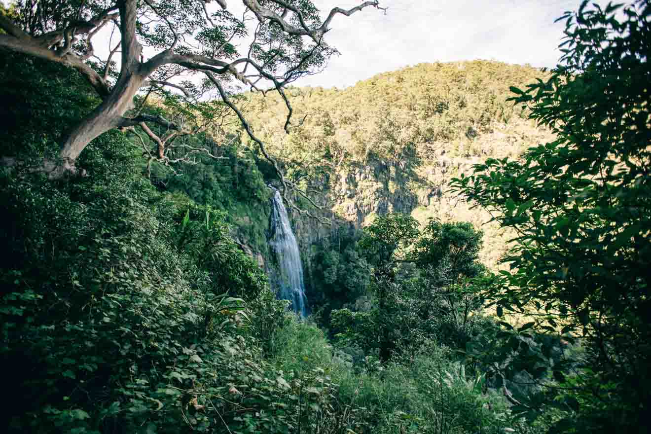 Parque Nacional Lamington Cosas que hacer en la Costa de Oro con un presupuesto