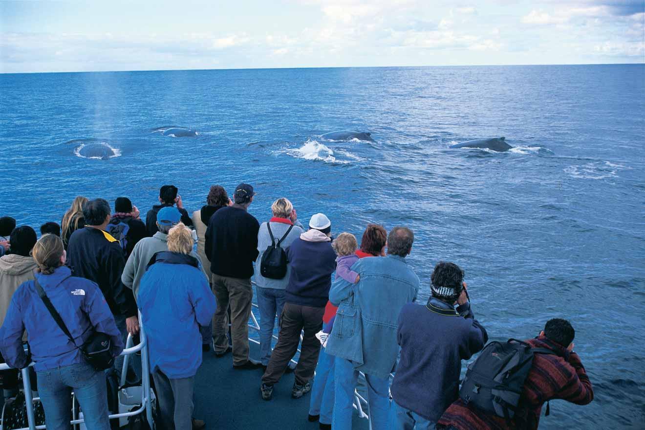 Avistamiento de ballenas en Flinders Bay Cosas que hacer al viajar al río Margaret en ferry