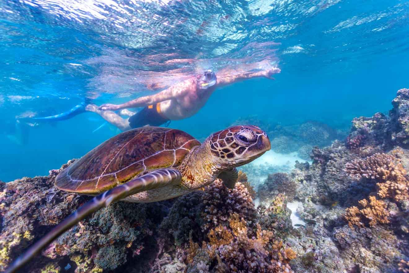 Turquoise Bay Australia Occidental 1 semana itinerario de viaje por carretera