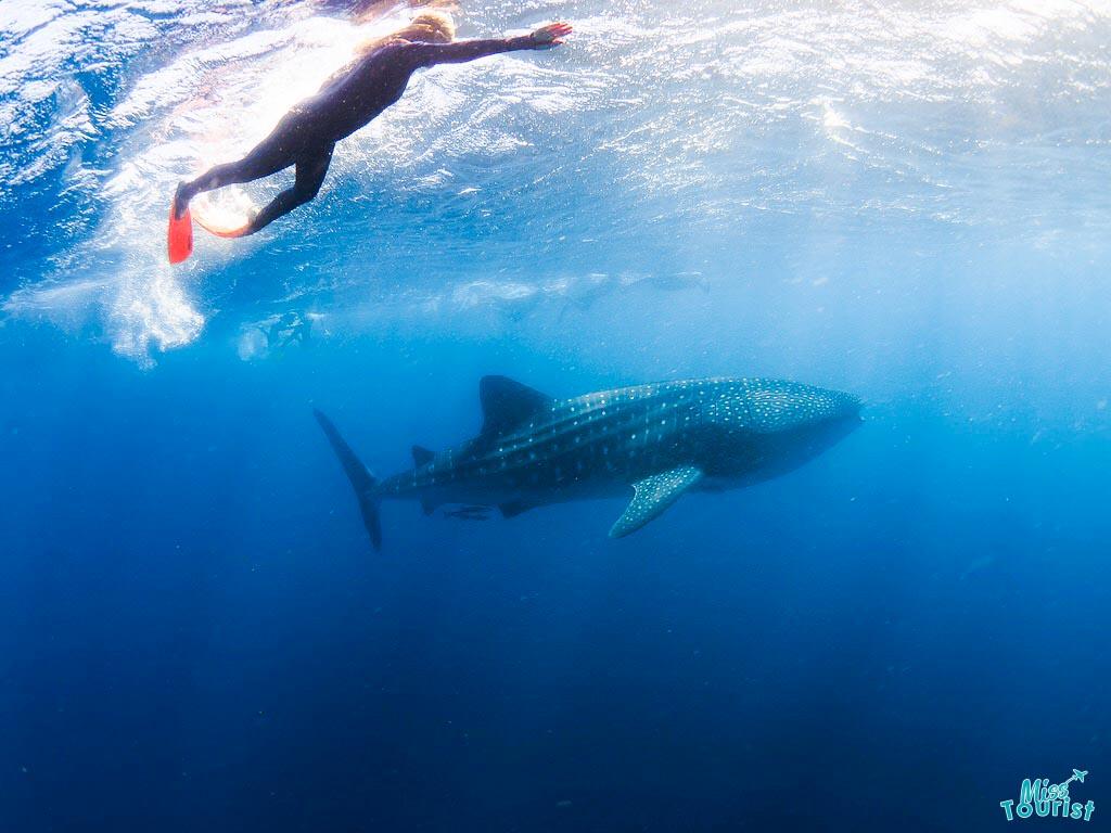 cosas que hacer Arrecife Ningaloo Australia Occidental Viaje por carretera nadar con ballenas