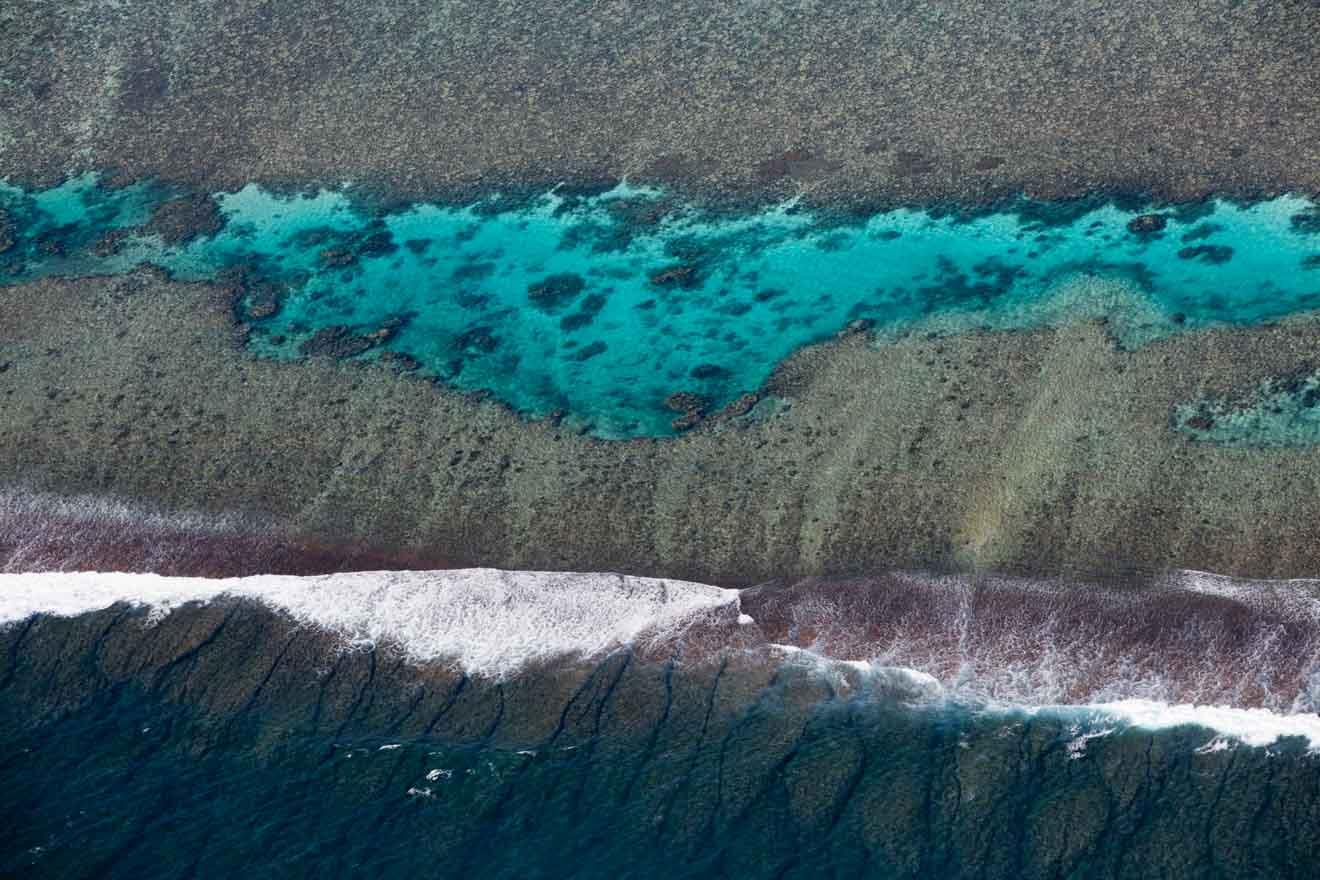 Tiburones ballena litoral arrecife mejor momento para visitar arrecife de ningaloo
