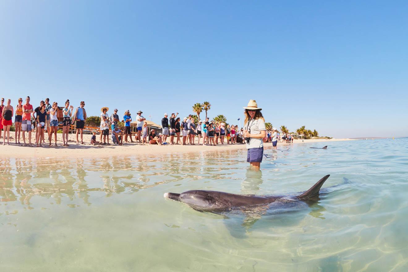 RAC Monkey Mia Dolphins viendo cosas que hacer en Shark Bay