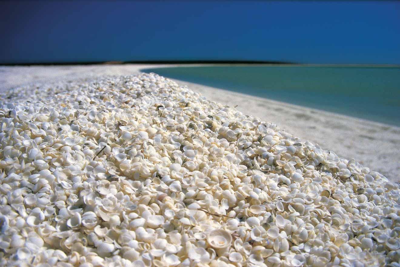 Shell Beach Cosas que hacer en Shark Bay y Mia Monkey Entrada
