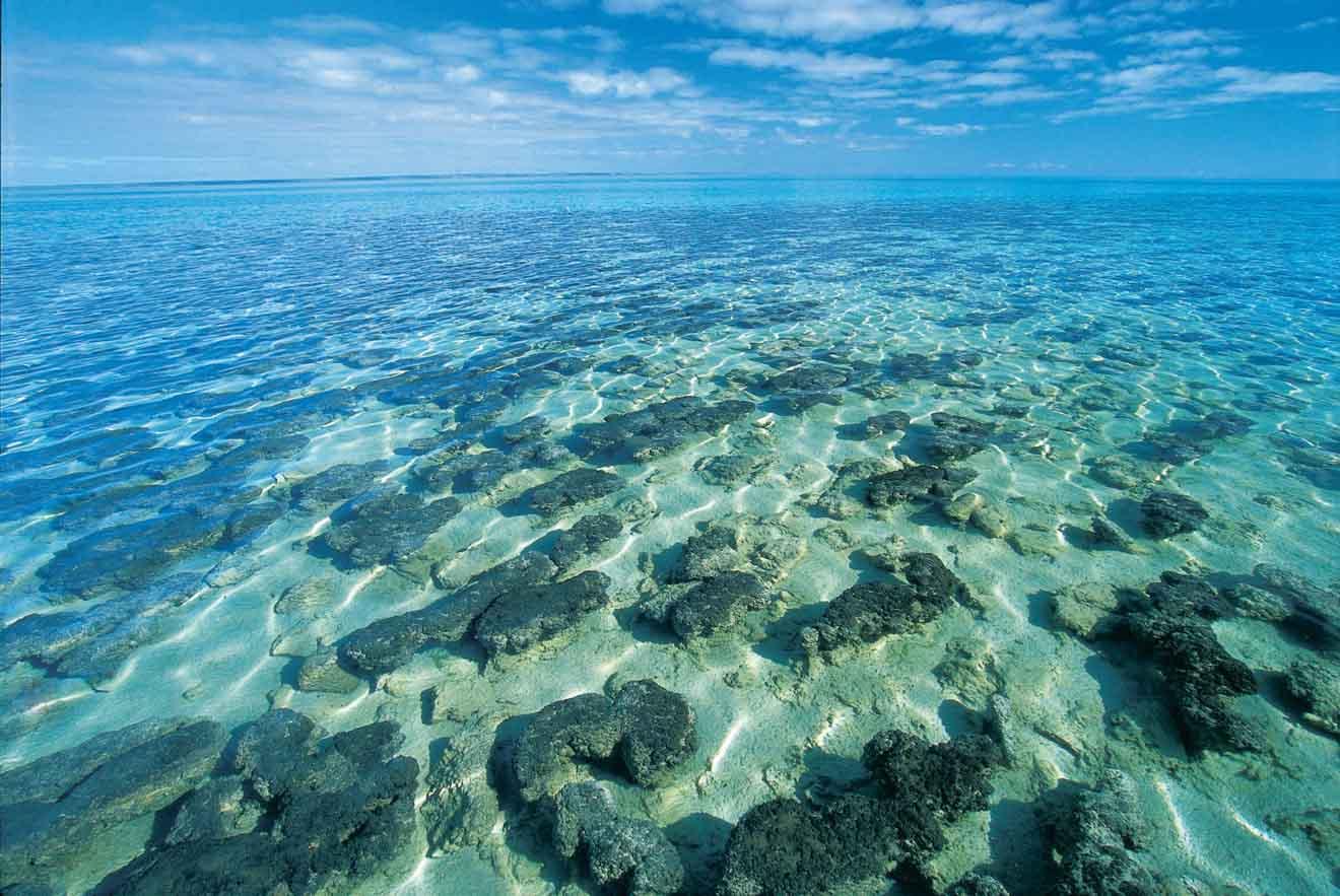 Estromatolitos en Hamelin Pool ¿Qué hacer en Shark Bay?