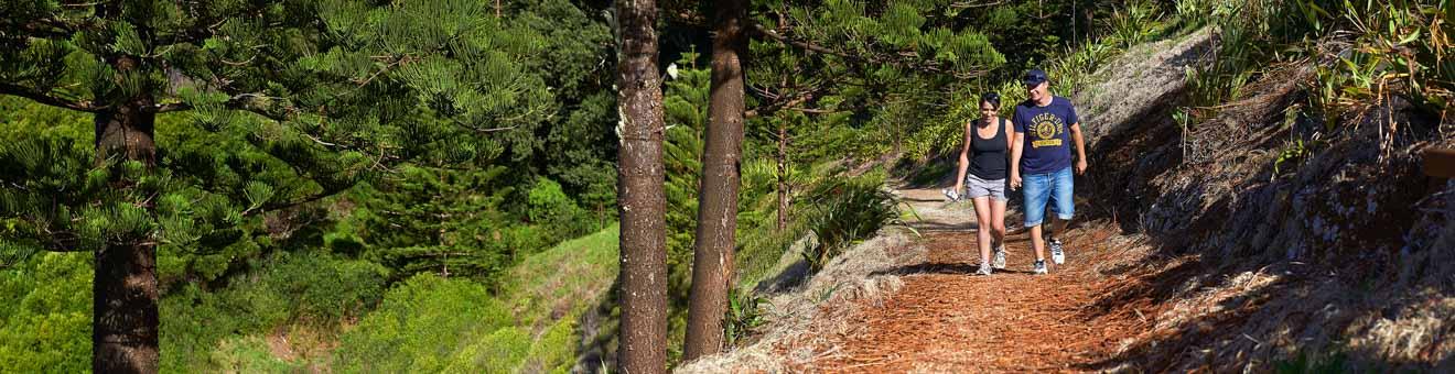 Ideas para reuniones Bush Walking Isla Norfolk Cosas que hacer