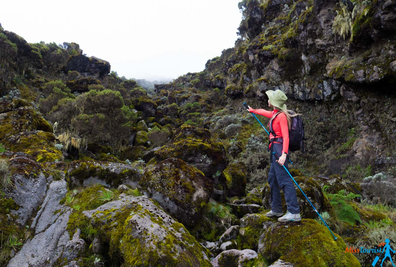 Escalar el Kilimanjaro: 7 cosas que debe saber antes de ir 18