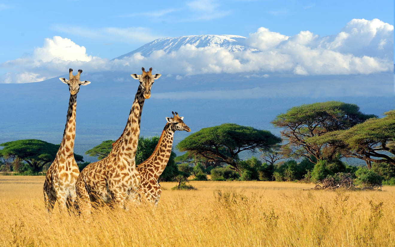 Climbing Kilimanjaro – 7 Things You Should Know Before You Go safari