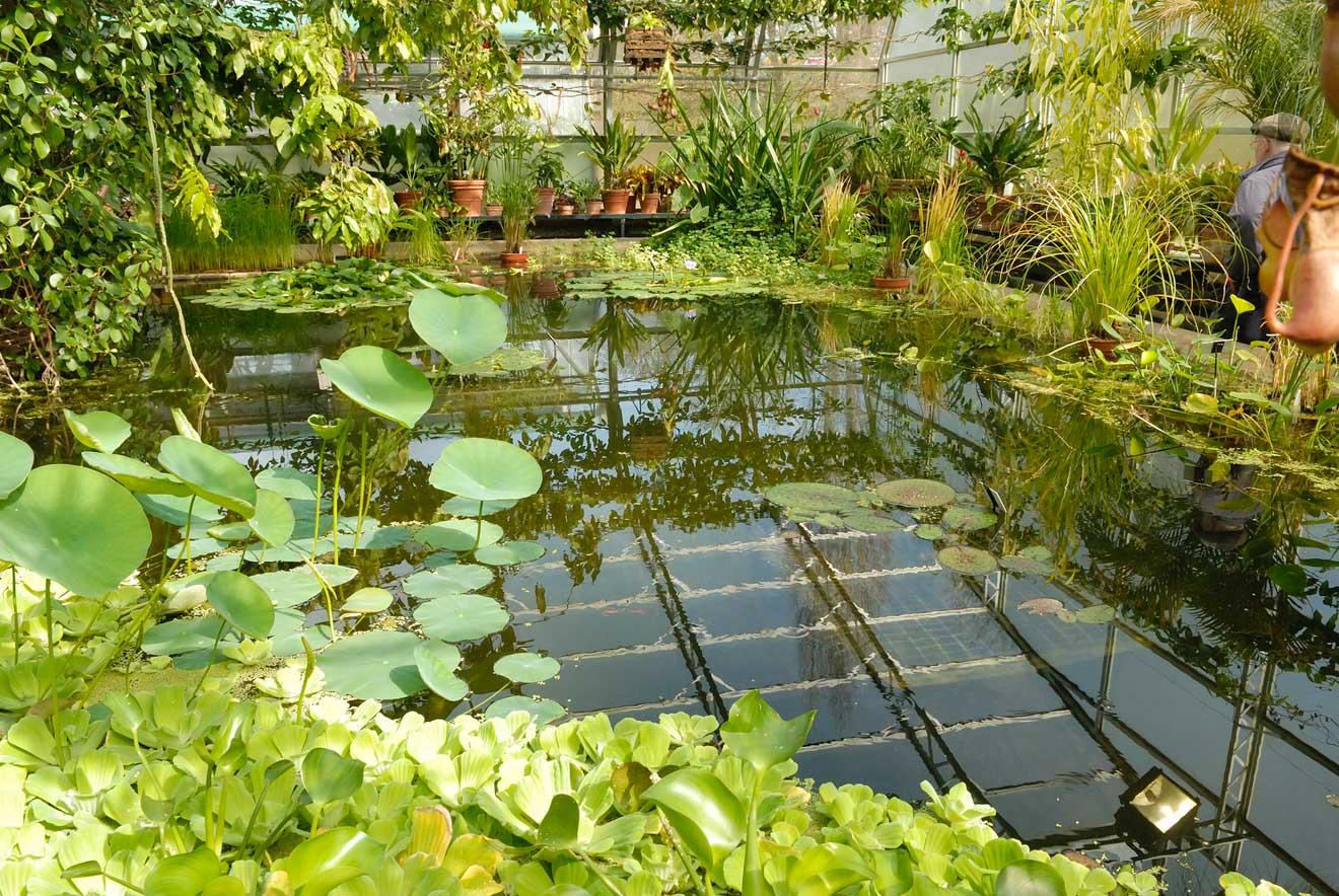 11 cosas que hacer en Oxford Botanic Garden