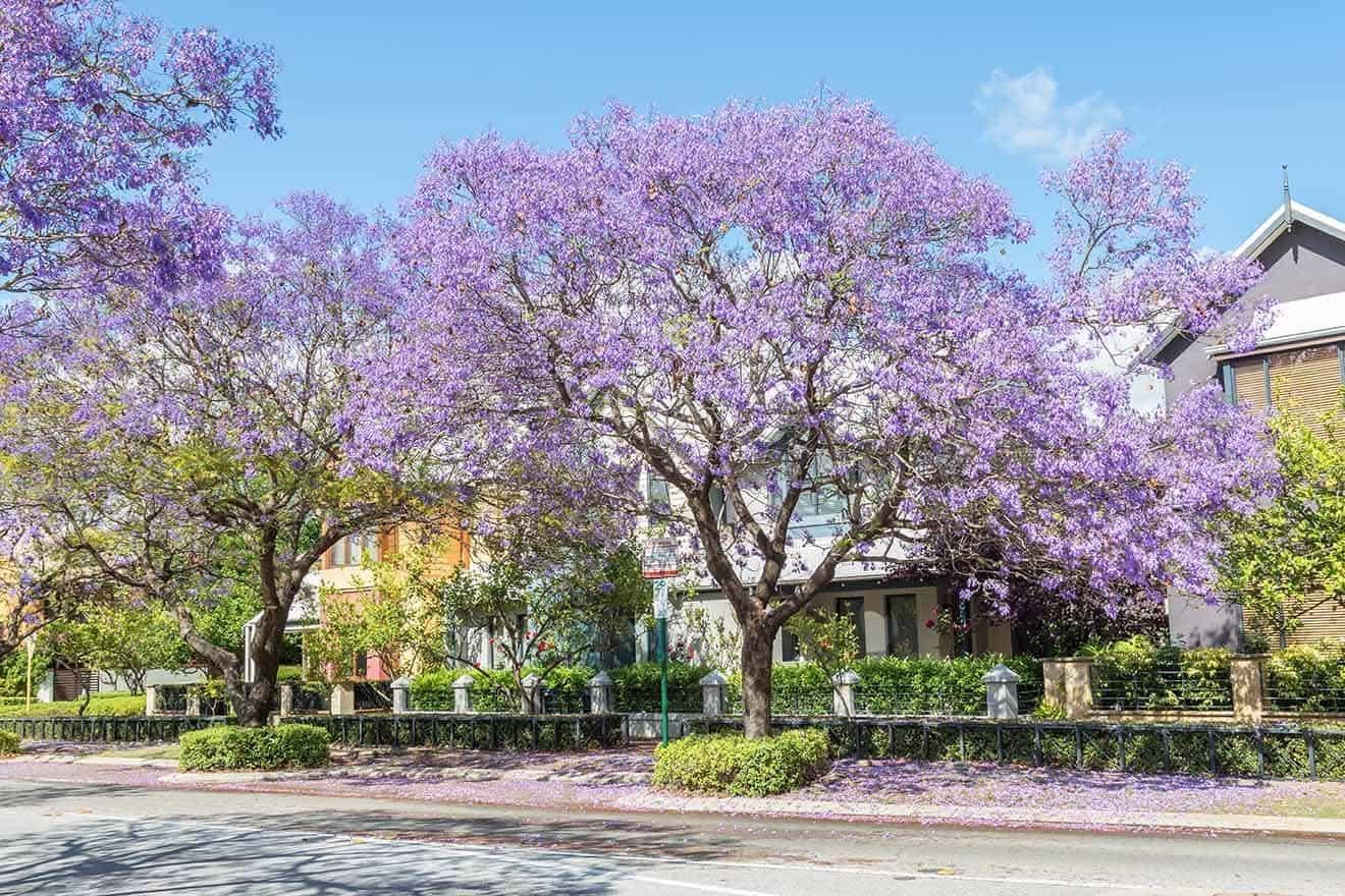 2 West Perth _ La mejor ubicación en Subiaco