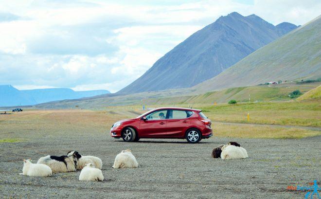 8 cosas que debes saber antes de alquilar un coche en Islandia Cover2